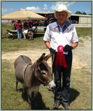 Cedar Acres Sunshine Serenity, Champion High Point Solid Color Donkey of Tennessee!